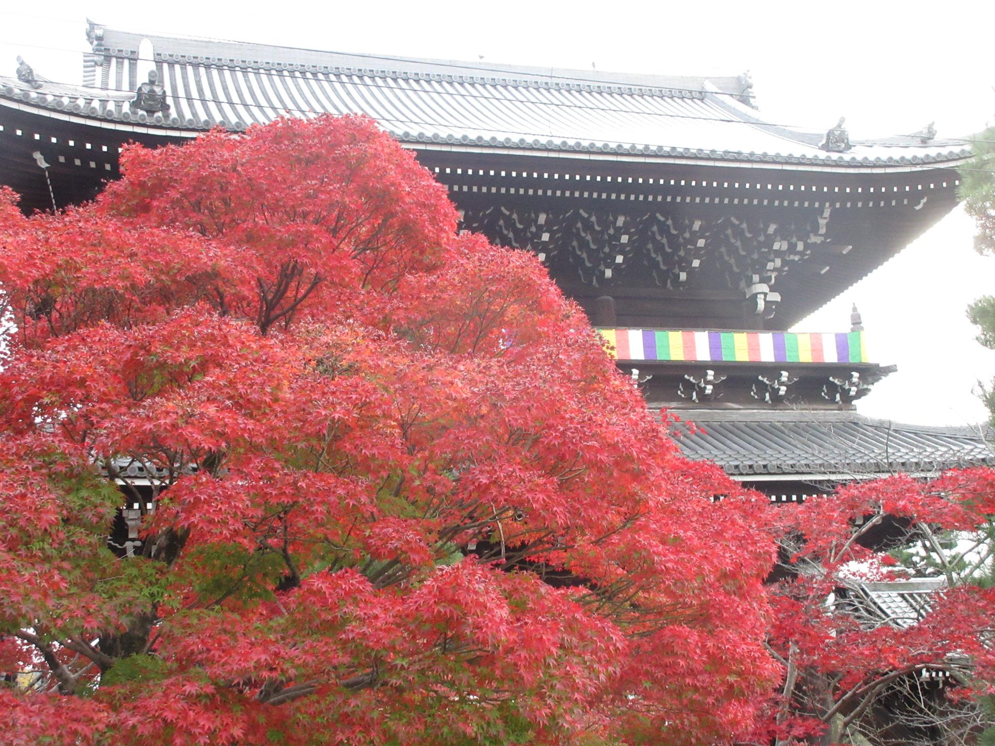 http://www.inoue-satoshi.com/diary/%E9%BB%92%E8%B0%B7%E5%B1%B1%E9%96%80.JPG